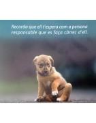 Gossos de la canera que ja han sigut adoptats per una família.